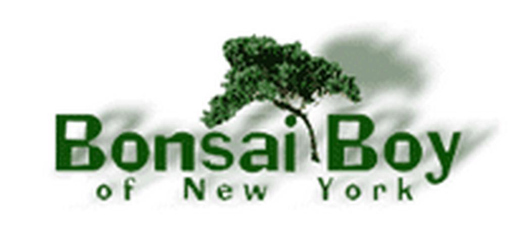 Bonsai Boy of New York cashback offer